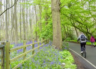 Spring in Goatsmoor Lane | David Twitchett