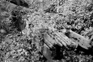 Photo of the post lying in the undergrowth   Dallas Simpson